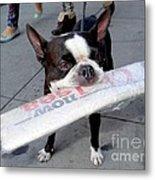 Betty The News Dog Metal Print