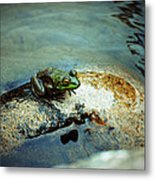 Between A Frog And A Hard Place Metal Print