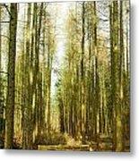 Betweenthe Trees Metal Print