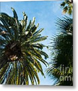 Beverly Palms Metal Print