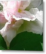 China Rose 2 Metal Print
