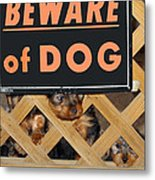 Beware Of Dog Metal Print by John Dauer