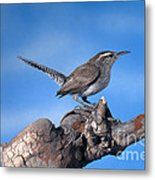 Bewicks Wren Metal Print