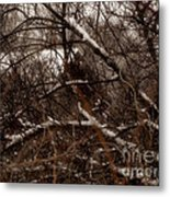 Beyond The Thicket - Abandoned Metal Print