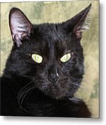 Big Bad Voodoo Kitty Metal Print