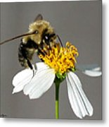 Big Bee Metal Print