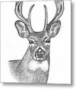 Big Buck Metal Print