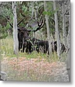 Big Daddy The Moose 1 Metal Print