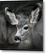 Big Ears Metal Print