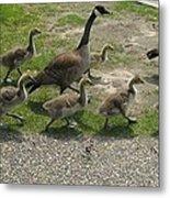 Big Family Crossing The Road Metal Print