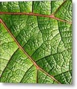 Big Green Leaf 5d22460 Metal Print