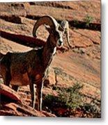 Big Horn Ram At Zion Metal Print