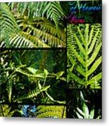 Big Island Of Hawaii Ferns 2 Metal Print by Colleen Cannon