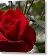 Big Red Rose Metal Print