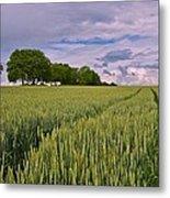 Big Sky Montana Wheat Field  Metal Print