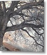 Big Sur Oak Metal Print