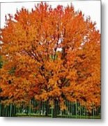 Big Tree In Autumn Metal Print
