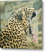 Big Yawn Metal Print