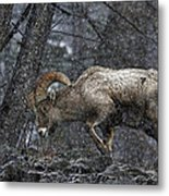 Bighorn Caught In A Blizzard Metal Print