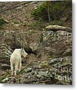 Billy Goat 3 Metal Print