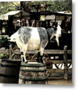 Billy Goat Big Thunder Ranch Frontierland Disneyland Metal Print