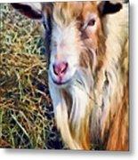 Billy Goat Closeup Metal Print