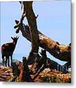 Billy The Goat Metal Print