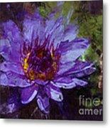 Biltmore Estate Water Lily Garden #2 Metal Print