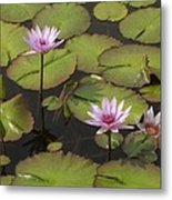 Biltmore Water Lillies Metal Print