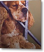 Bingo Loves His Nap On The Stairs Metal Print