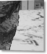 Birch Bark And Snow In Black And White Metal Print