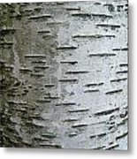 Birch Bark Metal Print