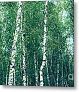Birch Forest - Green Metal Print