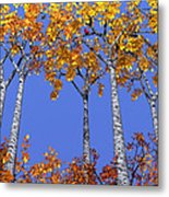 Birch Grove Metal Print by Cynthia Decker