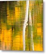 Birch Reflections Metal Print