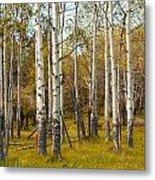 Birch Tree Grove No. 0126 Metal Print
