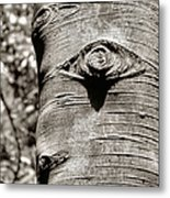 Birch Tree Spirits Metal Print