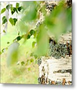 Birch Tree. The Soul Of Russian Nature Metal Print