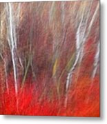 Birch Trees Abstract Metal Print