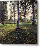 Birch Trees, Imatra, Finland Metal Print
