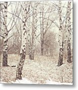 Birch Trees In The Snow. Winter Poems Metal Print