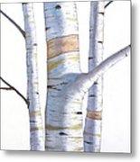 Birch Trees In Three Metal Print