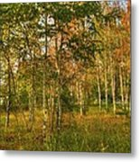 Birch Trees2 Metal Print