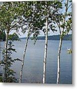 Birches On Sunapee Metal Print