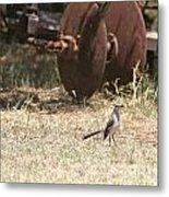 Bird Alert Metal Print