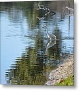 Bird And Pond Metal Print