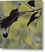 Bird Bait Metal Print