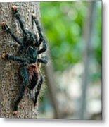 Bird-eater Tarantula / Tarantula Comedora De Aves Metal Print
