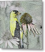 Bird Eating Seeds For One Digital Art Metal Print