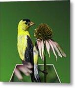 Bird Eating Seeds Metal Print